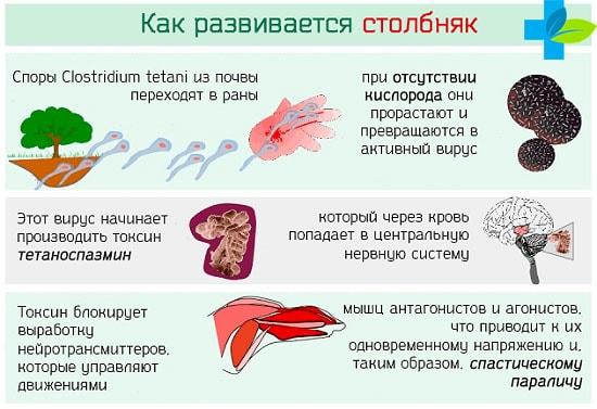 Вакцина против дифтерии столбняка гепатита