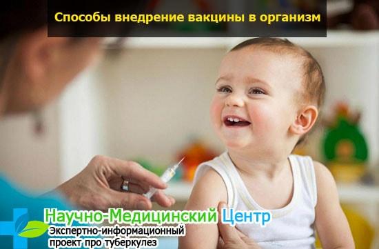Ревакцинация каких прививок