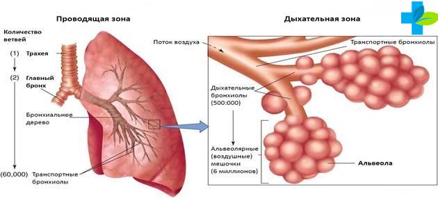 Причины ателектаза лёгких